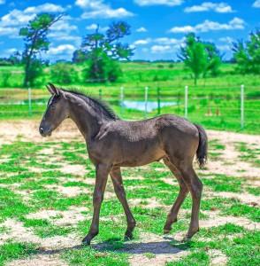 Foal 10[2888]