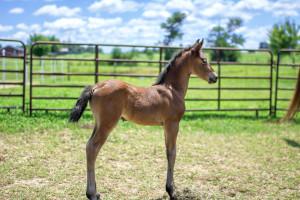 Foal 1[2868]