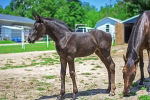 Foal 13