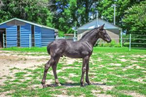 Foal 14