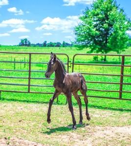 Foal 5[2876]