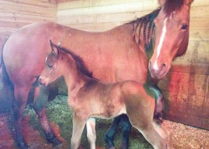 Filly2